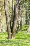 结构树在公园 免版税库存图片