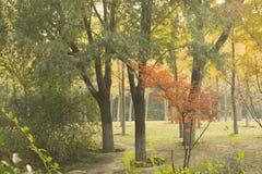 结构树在公园 免版税图库摄影