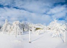 结构树在冬天 免版税图库摄影
