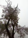 结构树在冬天 免版税库存照片