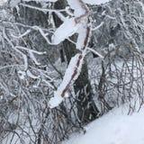 结构树在冬天 免版税库存图片