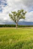 结构树在夏天 库存照片