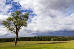 结构树在夏天 库存图片