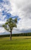 结构树在夏天 免版税库存照片