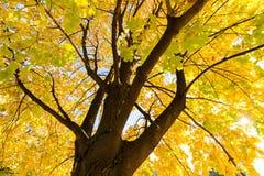 结构树在早期的秋天 免版税库存照片
