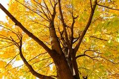 结构树在早期的秋天 免版税库存图片