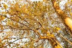 结构树在早期的秋天 库存照片