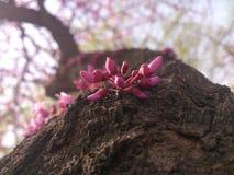 结构树在春天 库存图片