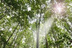 结构树在森林里 免版税图库摄影
