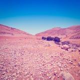 结构树在沙漠 库存照片