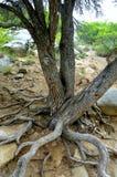 结构树在沙漠 免版税库存照片