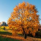 结构树在秋天阳光下 免版税图库摄影