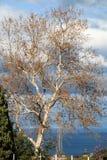结构树在秋天 免版税库存图片