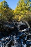 结构树在秋天 库存图片