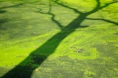 结构树影子 库存图片