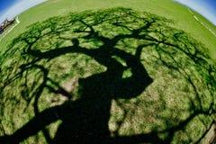 结构树影子 免版税库存图片