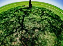 结构树影子 免版税库存照片