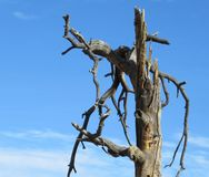 结构树扭转了 库存图片