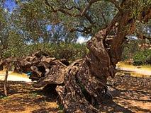 结构树扭转了 免版税图库摄影