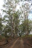 结构树排行了土路 免版税库存照片