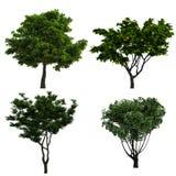 结构树收集 库存图片