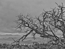 结构树本质上 图库摄影