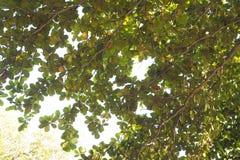 结构树生活 库存照片