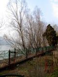 结构树的下条河 库存照片