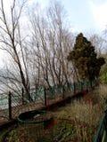 结构树的下条河 免版税库存照片