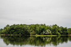 结构树的反映在河 图库摄影