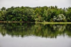 结构树的反映在河 库存图片