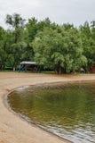 结构树的反映在河 免版税图库摄影