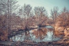 结构树的反映在水中 早期的春天 免版税库存照片