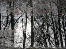 结构树的反映在水中 免版税库存照片