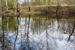 结构树的反映在水中 免版税库存图片