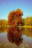 结构树的反映在水中 图库摄影