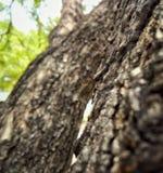结构树的吠声 图库摄影