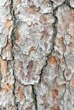 结构树的吠声 库存照片