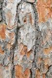 结构树的吠声 库存图片