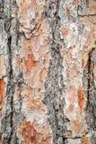 结构树的吠声 免版税图库摄影