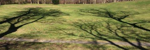 结构树的影子 免版税库存图片
