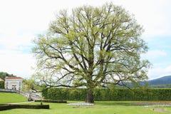 结构树的纵向 免版税库存照片