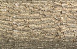 结构树皮肤纹理 库存照片