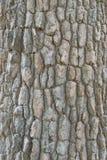 结构树纹理吠声 免版税库存图片