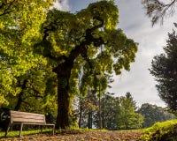 结构树详细资料 免版税库存照片