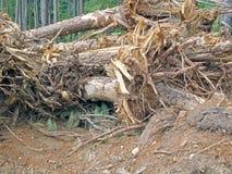 结构树连根了拔 免版税库存图片