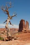 结构树风化了 图库摄影