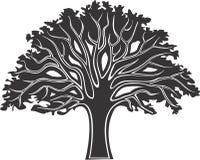 结构树3 免版税库存图片