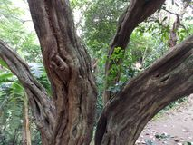 02结构树 免版税库存照片