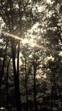 组结构树 免版税库存照片